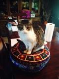 Normy on my meditation cushion (that I never use)